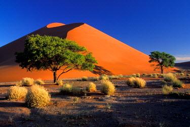 AF31_AWO0013_M Namibia, Namib-Naukluff Park, Sossosvlei dunes