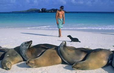 SA07_KSC0020_M Galapagos, Sullivan Bay, Hood Island, man with Galapagos Sea Lions.