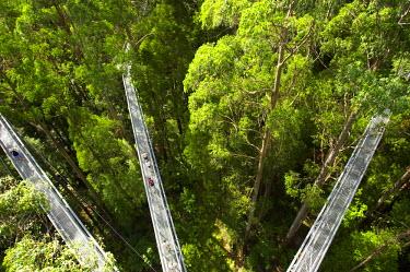 AU01_DWA1595_M Otway Fly Tree Top Walk, Otway Ranges, Victoria, Australia