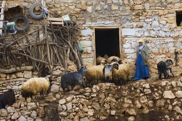 AS37_DGU0329_M Turkey Villiage below Mount Nemrut with Arab Women hearding Goats that have been up in the hills
