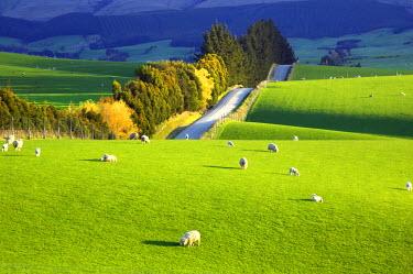 AU02_DWA0133_M Farmland near Balclutha, South Otago, South Island, New Zealand