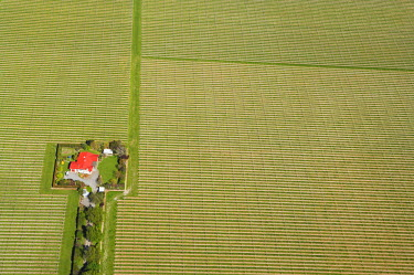 AU02_DWA1105_M Vineyard near Blenheim, Marlborough, South Island, New Zealand