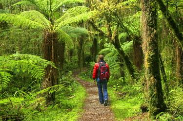 AU02_DWA1538_M Track to Moira Gate Arch, Oparara Basin, near Karamea, Kahurangi National Park, West Coast, South Island, New Zealand