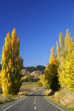 AU02_DWA3913_M Autumn Colour, Waimarama Road, Tukituki Valley, Hawkes Bay, North Island, New Zealand