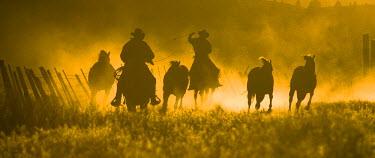 US38_BJA0359_M USA, Oregon, Seneca, Ponderosa Ranch. Silhouette of wranglers rounding up  horses at sunset (MR) (PR)