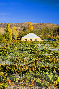 AU02_DWA4468_M Historic House, Domain Road Vineyard, Bannockburn, Central Otago, South Island, New Zealand