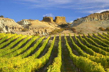 AU02_DWA4569_M Mt Difficulty Vineyard in Autumn, and Historic Gold Sluicings, Bannockburn, Central Otago, South Island, New Zealand