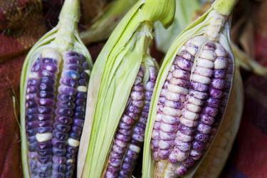 SA17_JME0085_M Purple corn displayed in market, Cuzco, Peru, South America