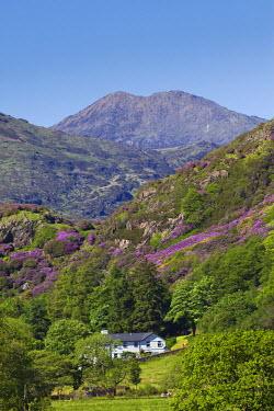 TPX11881 Wales, Gwynedd, Snowdonia National Park, View of Mount Snowdon from Beddgelert