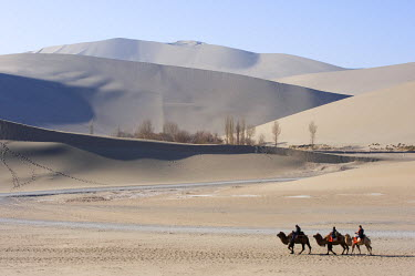 CH8952 China, Gansu Province, Dunghuang, camels in Ming Sha sand dunes