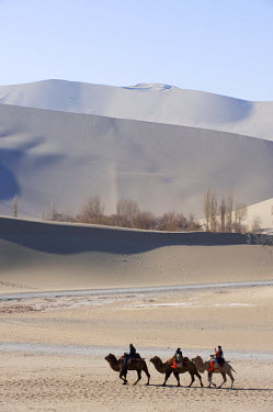 CH8953 China, Gansu Province, Dunghuang, camels in Ming Sha sand dunes