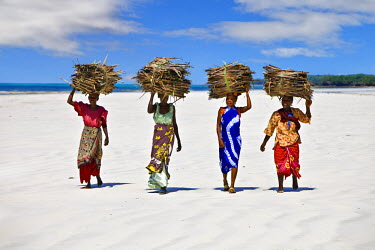 KEN6201 Kenya, Mombasa. Women carry on their heads makuti (dried coconut palm fronds used as roofing material) on a beach on Kenya south coast.
