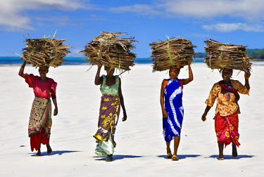KEN6349 Kenya Mombasa. Women carry on their heads makuti (dried coconut palm fronds used as roofing material) on a beach on Kenya�s south coast.