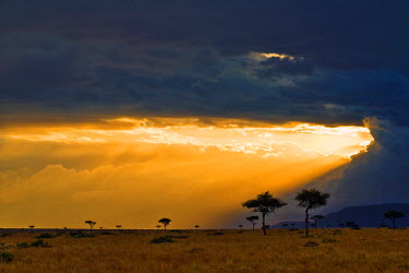 KEN6265 Kenya, Masai Mara. The setting sun breaks through clouds to light up the plains of Kenya�s most popular destination for viewing wild animals.