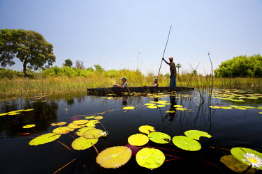 BOT5182 Botswana, Okavango Delta. A local guide punts a mokoro through the channels of the Okavango Delta