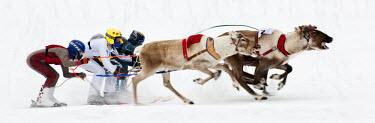 FIN1020AW Reindeer racing in Inari, Lapland, Finland