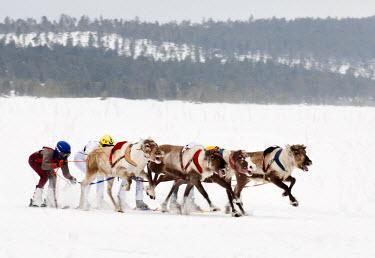 FIN1019AW Reindeer racing in Inari, Lapland, Finland