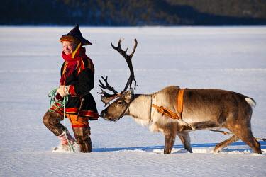 FIN1013AW Sami and reindeer, Lapland, Findland