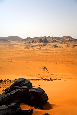 SUD1161 Sudan, Begrawiya. A solitary camel walks past the ancient Meroe Royal Cemetry at Begrawiya