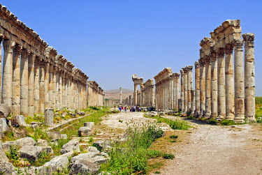 SY1319 Syria, Apamea. The Cardo maximus.