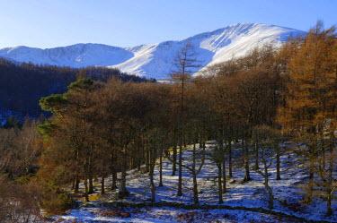 WAL7030 Wales, Gwynedd, Snowdonia. Wintery trees near Llanberis with Snowdon behind.