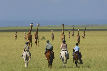 KEN6883 Kenya, Chyulu Hills, Ol Donyo Wuas.  A family on a riding safari, ride close to Maasai giraffe out on the plains.