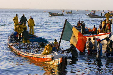 AF38_PLA0153 Senegal, Saint-Louis. Fishermen bring the fresh catch from the sea in the early morning