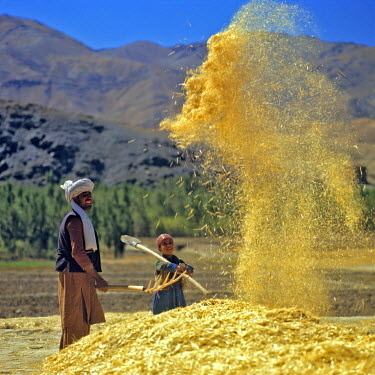AS01_RER0011 Afghanistan, Bamian Valley. A farmer and his son winnow grain in Bamian Valley, a World Heritage Site, in northern