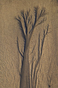 AU02_DWA5084 Sand Tree, Beach, New Plymouth, Taranaki, North Island, New Zealand
