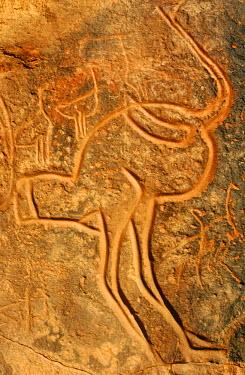 LIB1231 Libya, Fezzan, Messak Settafet. A petroglyph of an ostrich stands among the rocky outcrops of Wadi Mathendusch.