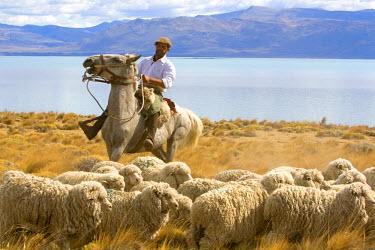 SA01_DFR0156 Gauchos herd sheep near Lake Argentino on the Patagonian grasslands near El Calafate, Argentina.