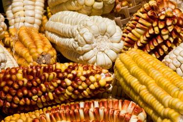 SA03_PLA1446 Colourful dried corns, Jatun Yampara Indigenous Community, Chuquisaca Department, Bolivia