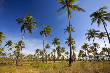MOZ1488 Mozambique, Tofo. Coconut plantations around Tofo.