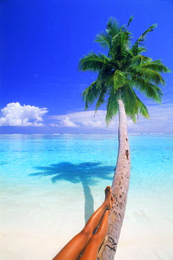 NP01855821 Tan legs relaxing on palm tree over white sandy beach and pure clean aqua waters