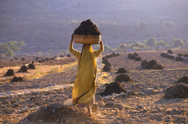 AR6639600034 Woman working in the fields, India