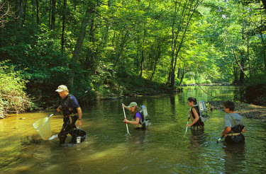 AR8718800015 Aquatic biologists from Montgomery County Department of the Environment electroshock brown trout as part of biological monitoring in the Patuxent River, Maryland. USA