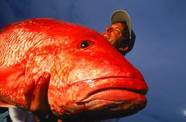 AR1940102601 Fishermen Shows Red Snapper, Alabama, USA