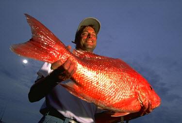 AR1940102604 Fishermen Shows Red Snapper, Alabama, USA