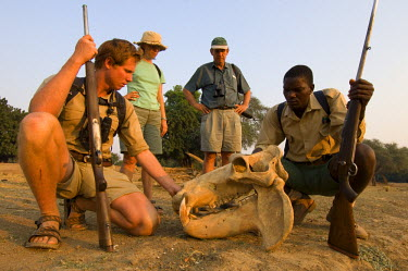 AR8749900045 Guests on a walking trail inspect a hippopotamus skull in Mana Pools National Park, Zimbabwe