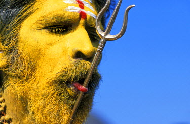 AR8789500046 Hindu worshiper with body piercing during the Thaipussam Festival, Tamil Nadu, India
