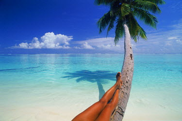 NP00339599 Tan legs relaxing on palm tree over white sandy beach with clean aqua waters.  The Maldive Islands.