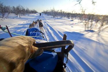 NOR0520 Norway, Finnmark Region. Dog sledding in the Arctic Circle