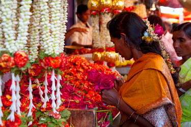 IND6138 India, Mysore. An elegant lady carefully chooses flowers at a Mysore flower market stall.