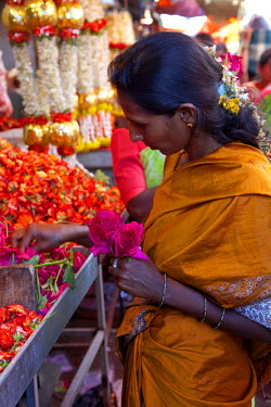 IND6139 India, Mysore. An elegant lady carefully chooses flowers at a Mysore flower market stall.