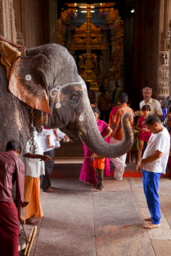 India, Madurai. A man is blessed by a holy elephant in the Meenakshi Sundereshwara Temple.