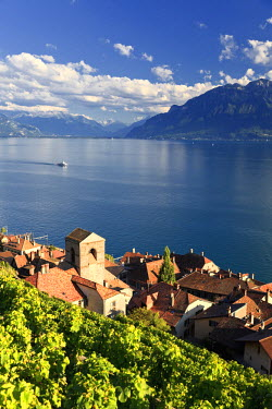 CH03491 Switzerland, Vaud, Lavaux Vineyards, St. Saphorin Village and Lac Leman / Lake Geneva
