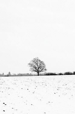 UK07034 UK, England, Cambridgeshire, Comberton, Winter Fields