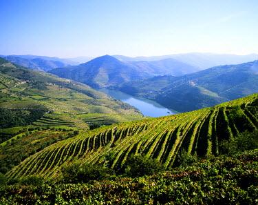 POR0363AW Vineyards at the Quinta do Infantado, Pinhao, on the Douro region, the origin of the world famous Port wine. A UNESCO World Heritage Site, Portugal
