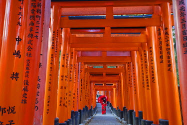 TPX21062 Japan, Kyoto, Fushimi Inari Taisha Shrine, Tunnel of Torii Gates
