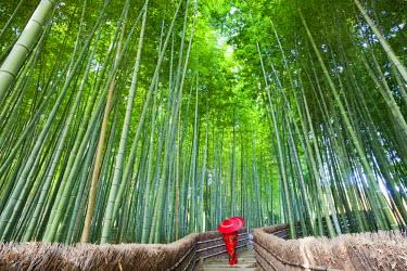 TPX21082 Japan, Kyoto, Arashiyama, Adashino Nembutsu-ji Temple, Bamboo Forest